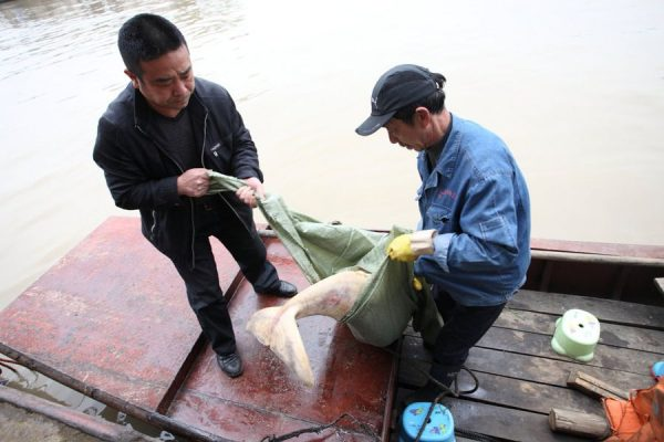 Endangered Yangtze river dolphins found dead in Hunan.