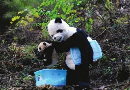grabbing a panda