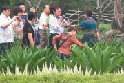 Mainland CHinese tourists carving names and messages onto the leaves of a native agave plant at a famous scenic area in Taiwan's Taitung county.