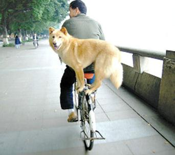 dog standing on a bike