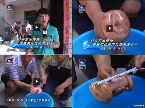 Screenshots of the Chinese news program where a female reporter mistook a male masturbation toy as a rare mushroom.