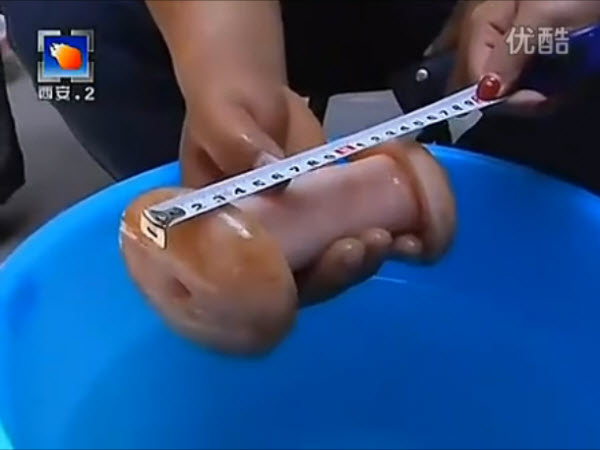 A Chinese female reporter measures a male masturbation toy, thinking it is a rare mushroom.