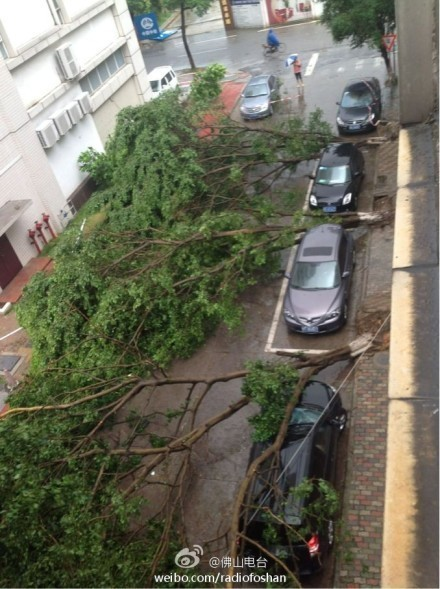 A car parked at the wrong spot got hit by the fallen tree