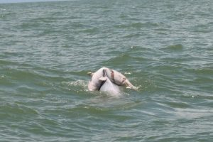 A dolphin is seen carrying its dead baby on its back in the waters off Guangxi, China, moving Chinese netizens after a pictures and videos are uploaded onto the Chinese internet.