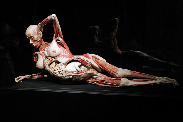 Hagens Human Cadavers Exhibition: All Bodies Come From Chinese Prisons