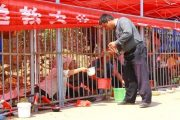 beggars-kept-behind-bars-at-temple-fair-03