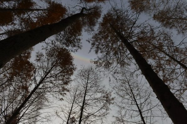 The upside down rainbow.