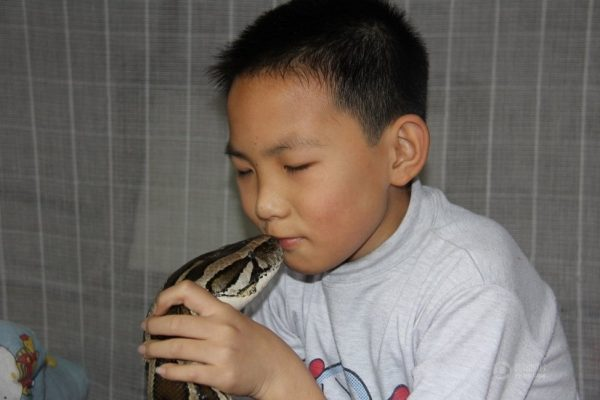 A Zhe is kissing his python.