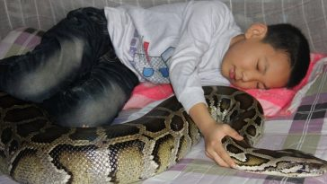 A Zhe and his python.