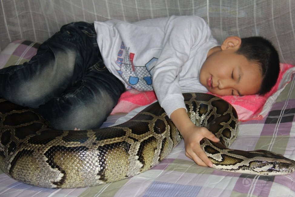 Little Chinese Boy and Python Lived Together For 12 Years