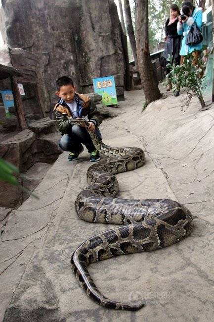 A Zhe is playing with his python.
