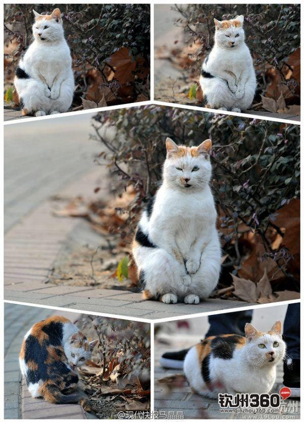 A stray cat in Nanjing, China seen seemingly rubbing its paws together.
