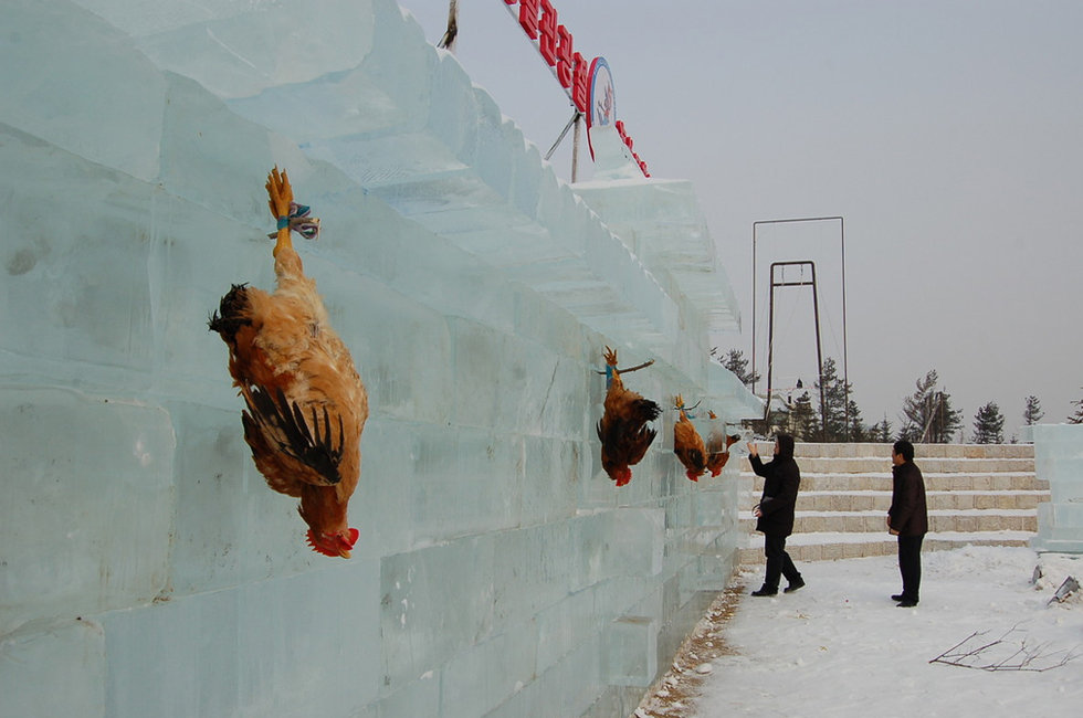 Several roosters are hanging on an ice wall.
