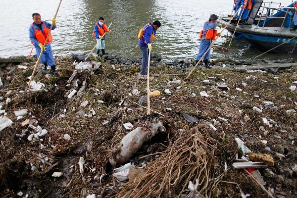 Chinese sanitation workers in Shanghai fish out thousands of dead pigs found floating in the Huangpu River by the city's Songjiang district.