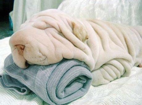Towel or dog?