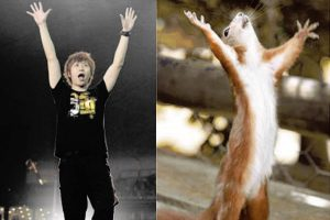 ashin-may-day-compared-to-squirrel-preview