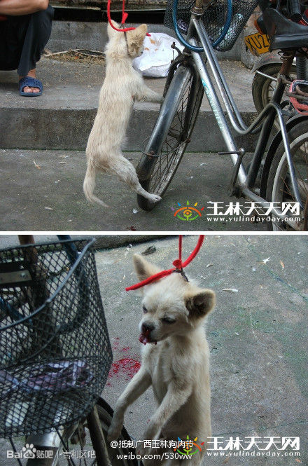 Dogs are being killed in Guangxi Yulin.