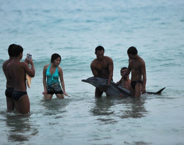 Some lifeguards are lifting the dolphin up for the tourists to take pictures with.