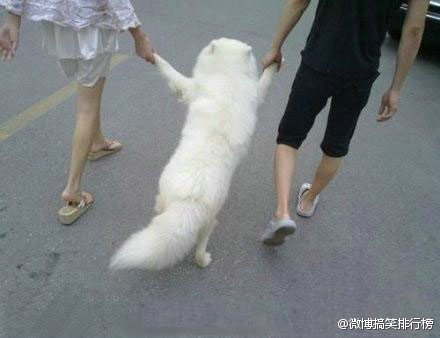 A couple walking a doggy