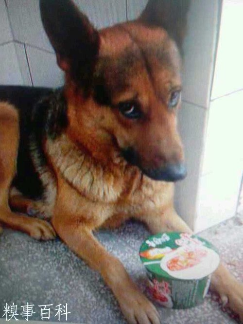 Dog and instant noodles