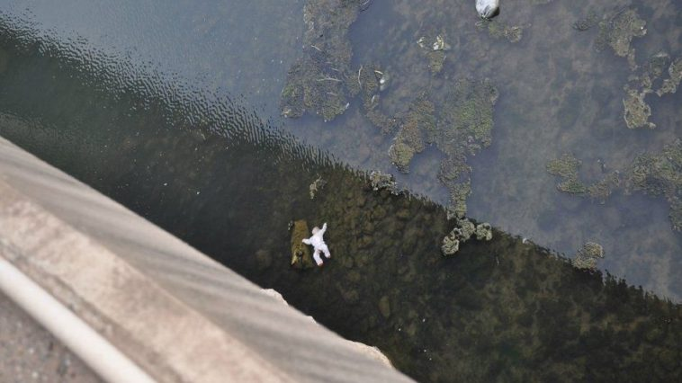 The body of an infant floating in a river after it had been dropped into a river from a bridge by parents fighting.