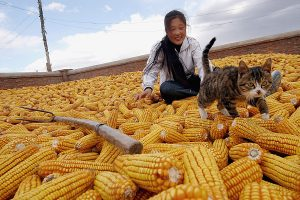 Asian girl with cat on ground covered with corn.