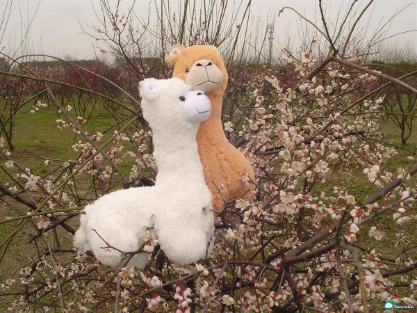 "Alpacas aka ""Grass Mud Horse"""