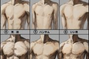 Different male body types.