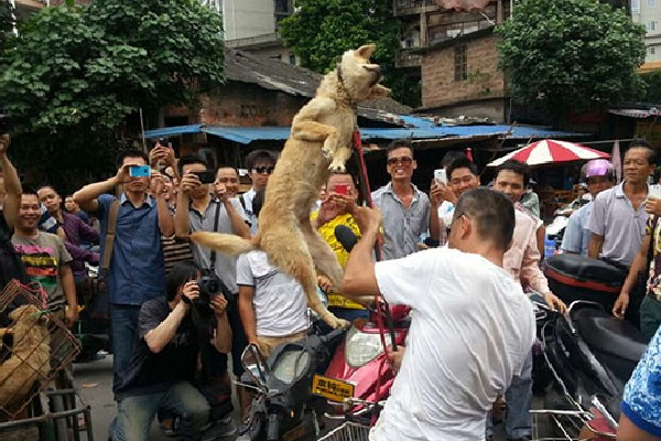 A dog peddler is lifting up a dog with a fork.