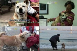 Chinese netizens translate a Korean story about the faithful dog of a fish-selling old granny.