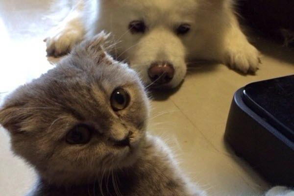 Cat Duanwu and dog Niu Niu, the pets of a popular Chinese Sina Weibo user.