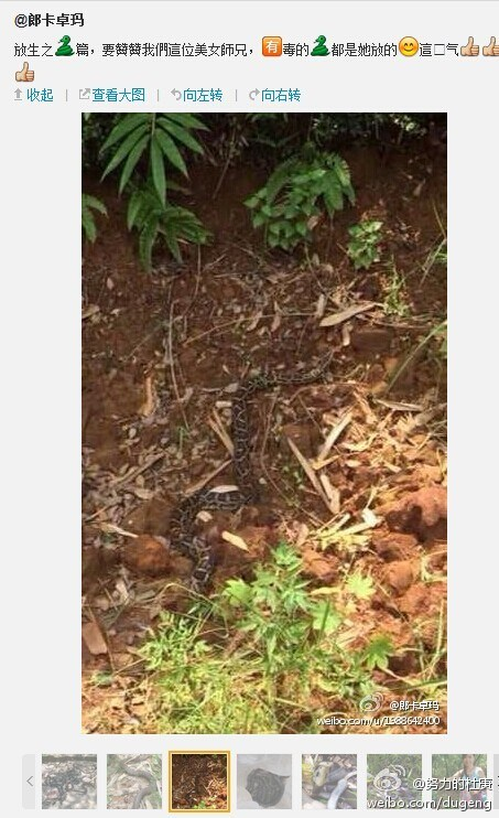 guangdong-chinese-woman-releases-poisonous-snakes-says-doing-good-07