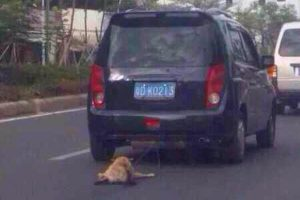 A dog tied to and dragged along by a car in Guangdong, China.