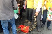 china-changsha-crabs-alligator-spilled-in-traffic-accident-looted-by-chinese-passerbys-13