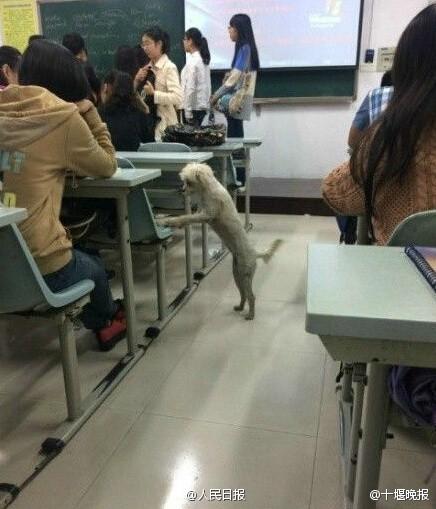 class-attending-dog-scholar-killed-dumped-in-trash-02