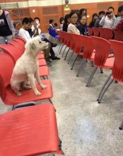 class-attending-dog-scholar-killed-dumped-in-trash-03
