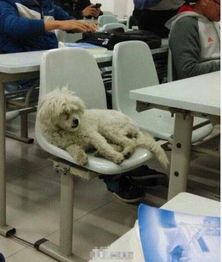 class-attending-dog-scholar-killed-dumped-in-trash-04