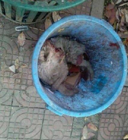 class-attending-dog-scholar-killed-dumped-in-trash-06