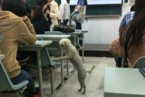class-attending-dog-scholar-killed-dumped-in-trash-cover
