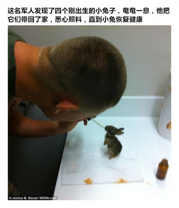 This soldier discovered four recently born little bunnies, on their last breath, took them home, carefully cared for them, until they regained their health.