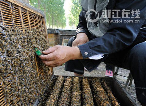china-bees-beehive