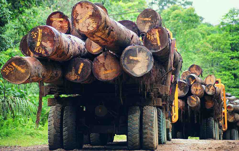 8 Million RMB of Lumber Goes Missing After Confiscation