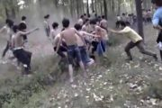 video of forest brawl involving over 100 kids goes viral