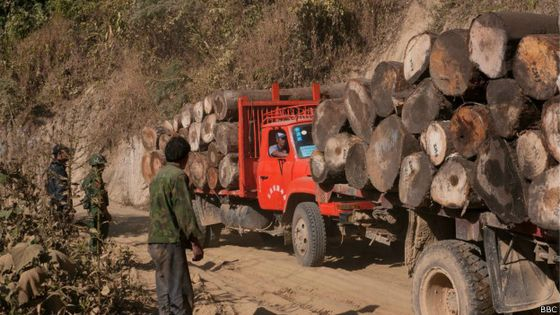 Chinese Illegal Loggers Pardoned and Released From Jail