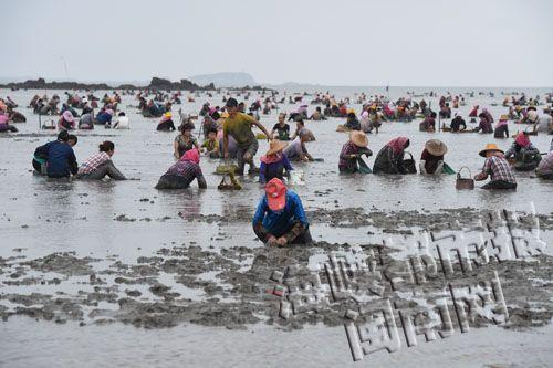 Looters Steal Over 200,000 RMB Of Clams From Breeding Farm