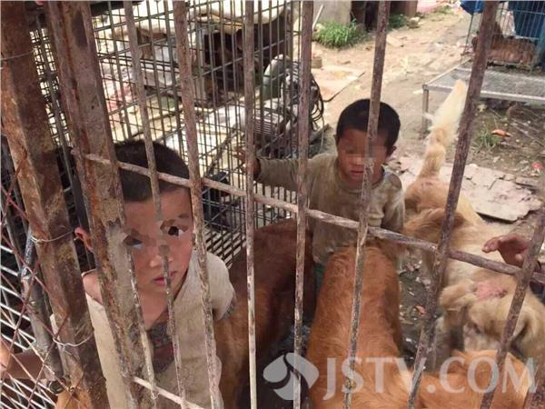 Nanjing Brother and Sister Live in Trash Pile With Dogs