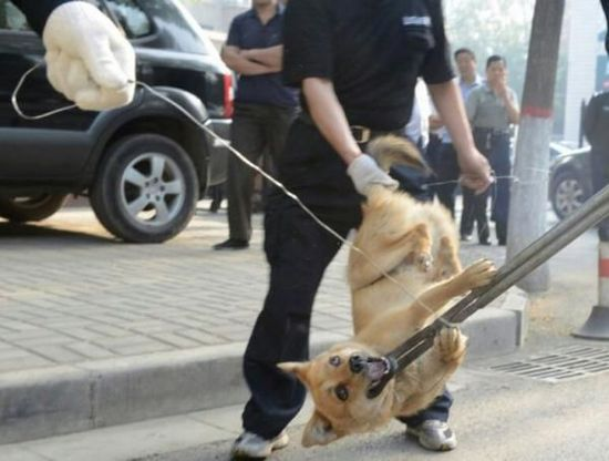 All Unvaccinated Dogs In Qinjiang To Be Slaughtered