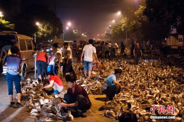 Festival Starts, Guanxi Starts Selling Ducks As Per Tradition