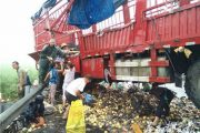 Pear Lorry Spills Cargo, Villagers Rush to Seize Bounty