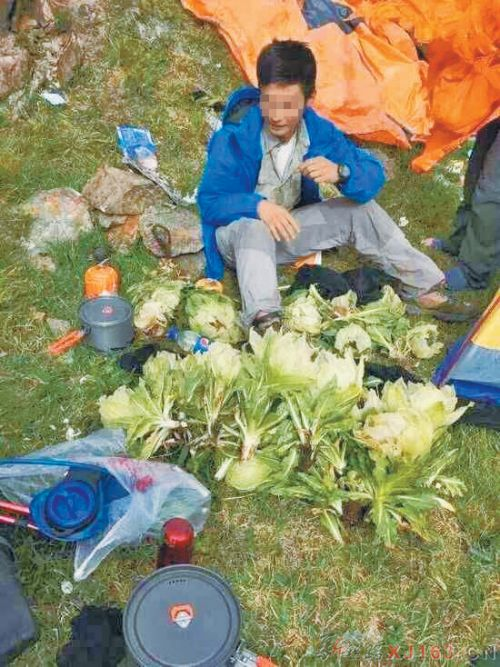 Ramblers Provoke Outrage For Picking Protected Flowers